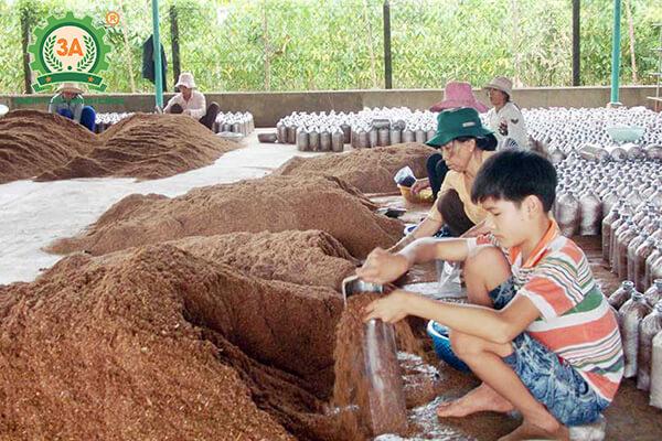 cách trồng nấm linh chi (05)