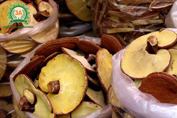 cách trồng nấm linh chi (10)