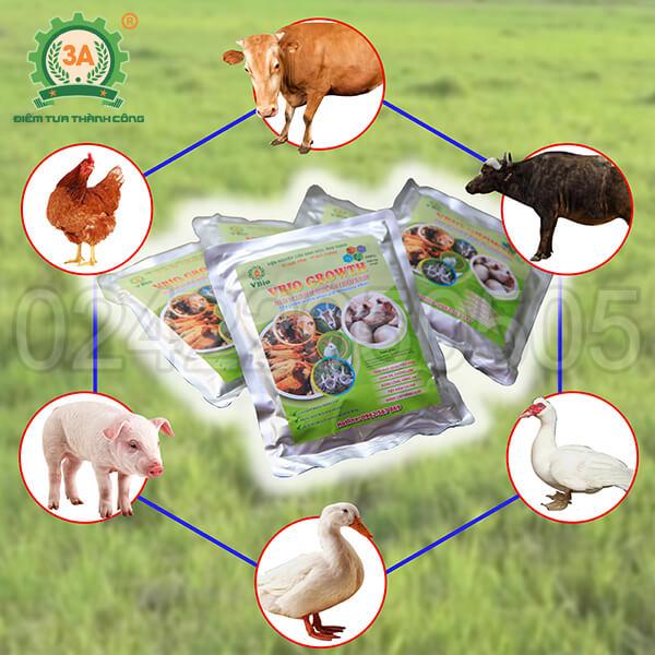 Men ủ thức ăn chăn nuôi 3A (01)