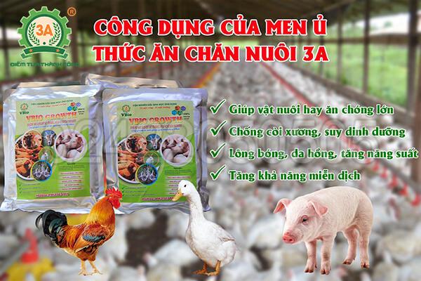 Men ủ thức ăn chăn nuôi 3A (08)